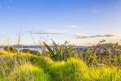 Vue de coucher du soleil sur Auckland CBD par l'herbe Images libres de droits