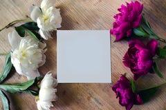 Vue de couleurs blanches et lilas de pivoine sur un conseil en bois avec le bla Photographie stock libre de droits
