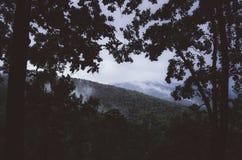 Vue de cuvette de montagne les arbres la nuit Photo libre de droits
