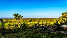 Vue de début de la matinée au-dessus de la savane en dehors du camp de repos de Pretoriuskop en parc national de Kruger Photo libre de droits