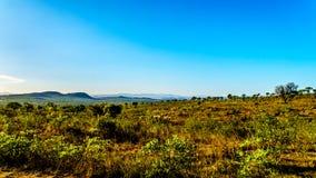 Vue de début de la matinée au-dessus de la savane en dehors du camp de repos de Pretoriuskop en parc national de Kruger Photographie stock libre de droits