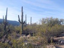 Vue de désert Image stock