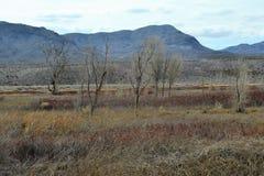 Vue de désert d'arbre Images stock