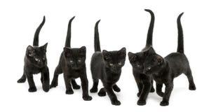 Vue de face d'un groupe de chaton noir Photo libre de droits