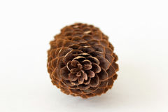 Vue de face de grand cône simple de pin Image libre de droits