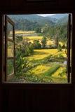 Vue de fenêtre aux terrasses merveilleuses d'un riz avec l'espace photographie stock libre de droits