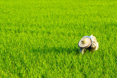Vue de ferme de riz Images stock