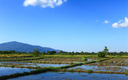Vue de ferme de riz Photographie stock