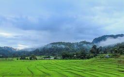 Vue de ferme de riz Image libre de droits