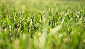 Vue de fin d'herbe verte Photos libres de droits