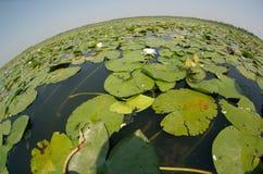 Vue de Fisheye d'un lac Images libres de droits
