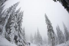 Vue de Fisheye d'une forêt Photos stock