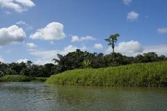 Vue de fleuve Images libres de droits