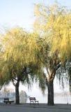 Vue de fleuve avec l'arbre de saule photographie stock