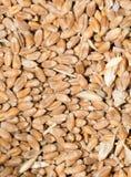 Vue de fond de blé à partir du dessus Images libres de droits