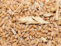 Vue de fond de blé à partir du dessus Photos libres de droits