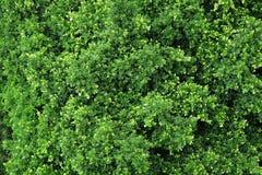 Vue de forêt à partir de dessus Image libre de droits