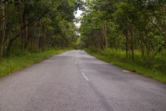 Vue de forêt à son meilleur tout en conduisant Photo libre de droits