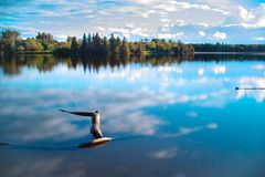 Vue de forêt au-dessus d'un lac Image stock