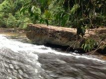 Vue de forêt de cascade Image libre de droits
