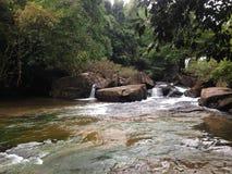 Vue de forêt de cascade photo libre de droits