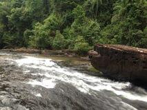 Vue de forêt de cascade photographie stock libre de droits