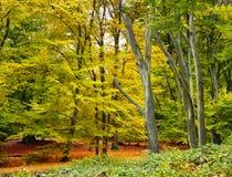 Vue de forêt d'automne Photos libres de droits