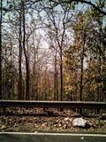 Vue de forêt d'automne Image stock