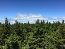 Vue de forêt de ligne d'arbre ci-dessus avec le ciel bleu Photographie stock libre de droits