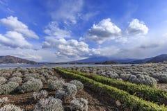 Vue de Fuji chez Kawaguchiko Image libre de droits