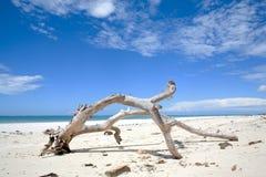 Vue de Genral de plage de Diani Image libre de droits