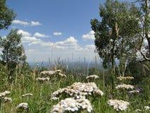 Vue de haute altitude de fleurs Photo stock