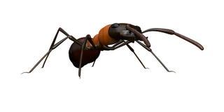 Vue de hauteur d'oeil d'une fourmi Photos stock