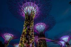 Vue de jardin par la baie la nuit - Singapour Images stock