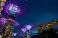 Vue de jardin par la baie la nuit - Singapour Photos stock