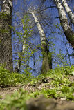 Vue de l'au sol de la terre des arbres Photo stock