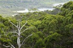 Vue de l'Australie occidentale de rivière de Walpole en automne Images libres de droits