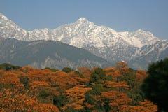 Vue de l'Himalaya de Dhauladhar de jardin de thé Photos stock