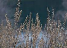 Vue de l'hiver Photo stock