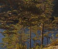 Vue de la baie de la falaise avec des arbres Image libre de droits