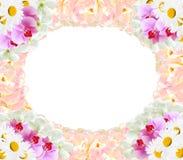 Vue de la camomille différente de tulipes d'orchidées de fleurs Photographie stock libre de droits