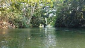 vue de la longueur 4K de voyage de bateau le long de la rivière avec la vue de côté tropicale de forêt tropicale clips vidéos