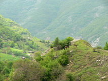 Vue de la montagne de Rhodope, Bulgarie Photo stock