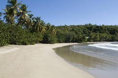 Plage de Sagesse de La frangée de palmiers, Grenada, la Caraïbe orientale. Images libres de droits
