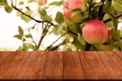 Vue de la pomme rouge fraîche sur une branche au-dessus de vieil en bois léger merci photo stock