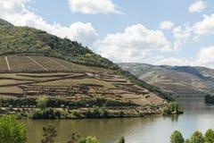 Vue de la rivière, des domaines, et des vignobles de Douro Image libre de droits
