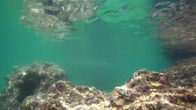Vue de la roche sous l'eau clips vidéos