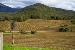 Vue de la route à Milford Sound photo libre de droits