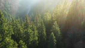 Vue de la taille des montagnes couvertes de brouillard conifére de forêt et de matin aube banque de vidéos