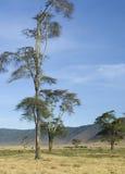 vue de la Tanzanie de ngorongoro de cratère Images stock